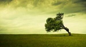 שדה השייך לחקלאי הזקוק להלוואה